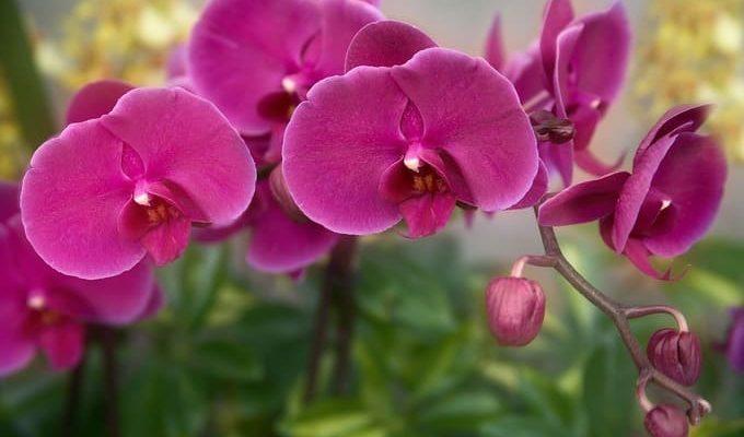 Магические цветы
