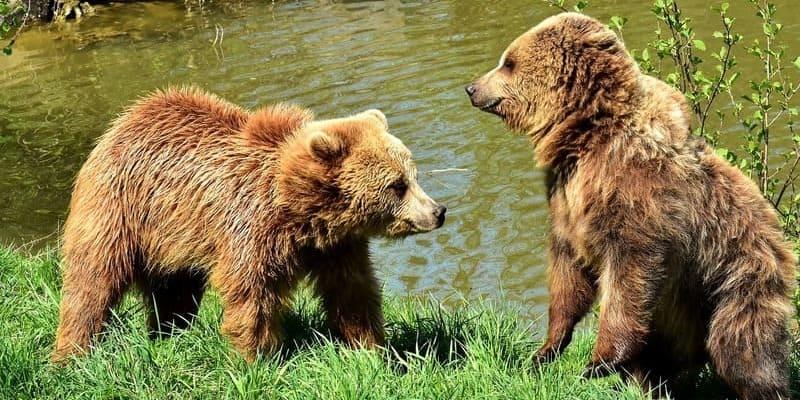 Фото медведей