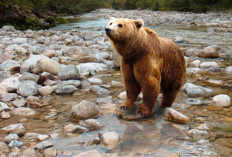 Фото медведя на камнях