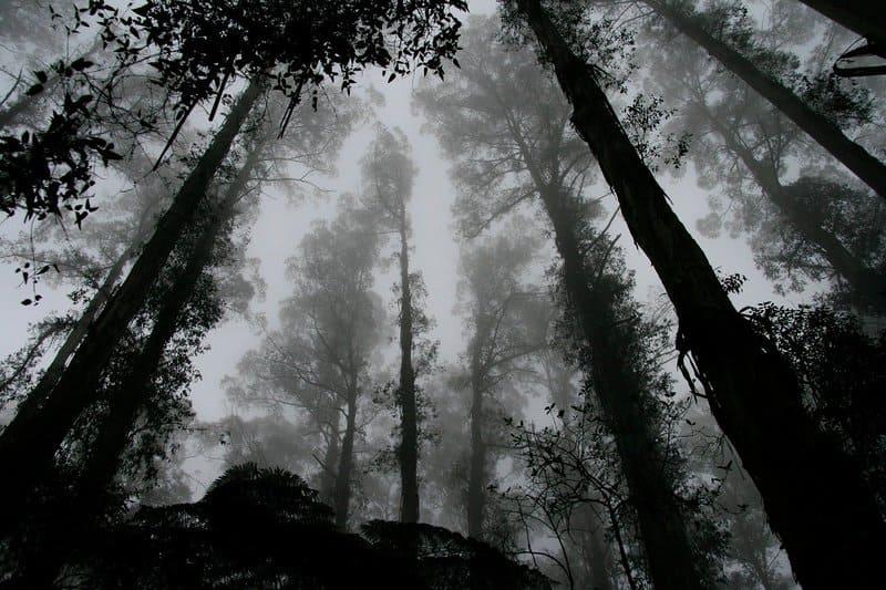 Фото черно-белого сна