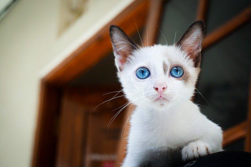 Фото белого котенка