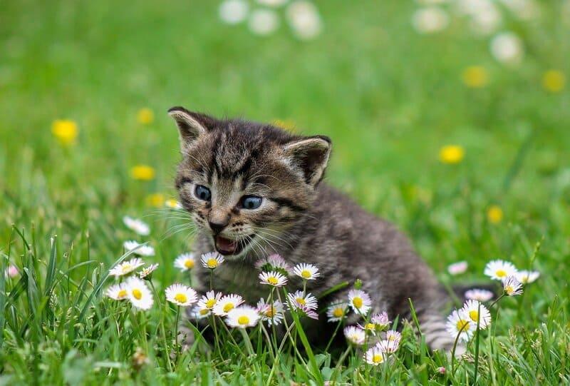 Фото котенка и цветка