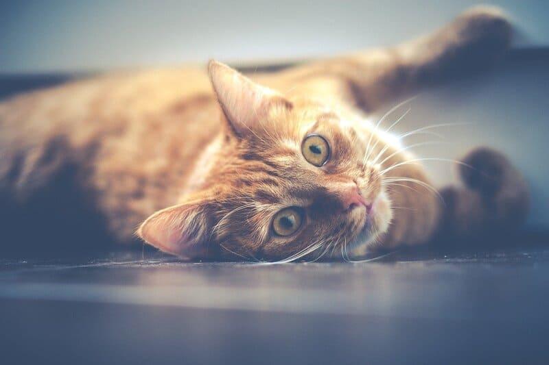 Фото ленивого кота