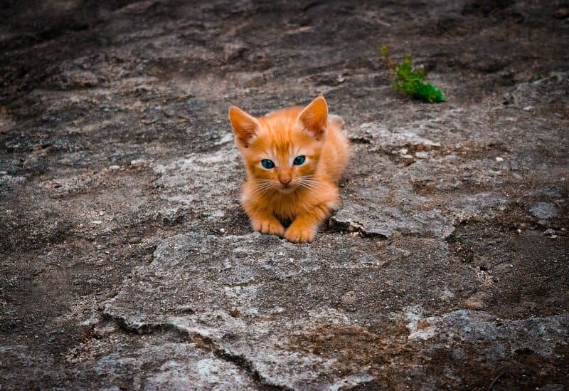 Фото котика на камнях
