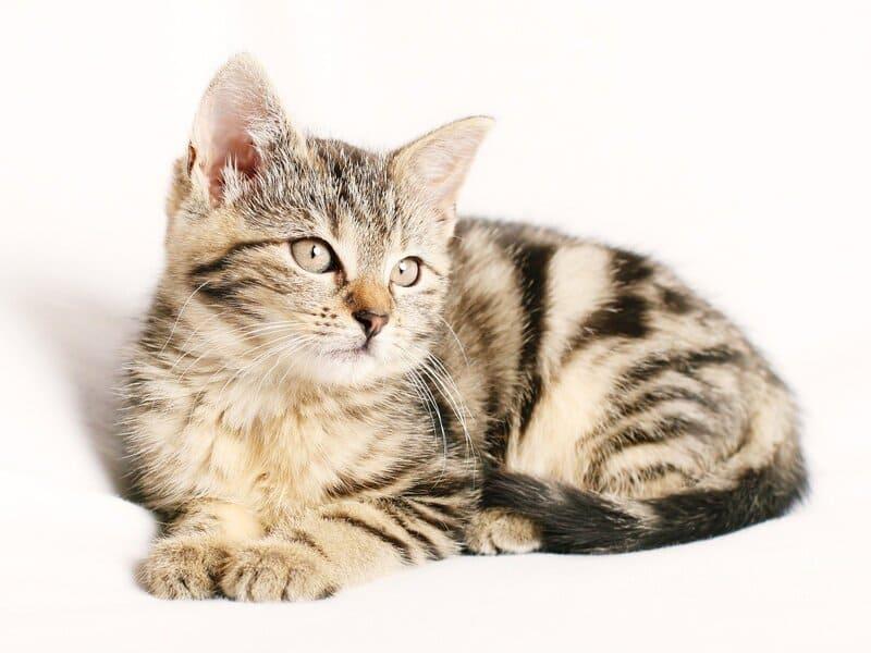 Фото полосатого котенка