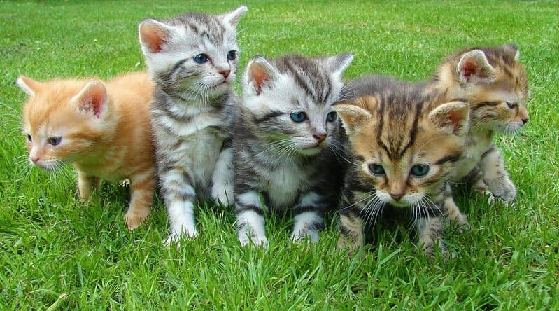 Фото 5 котят