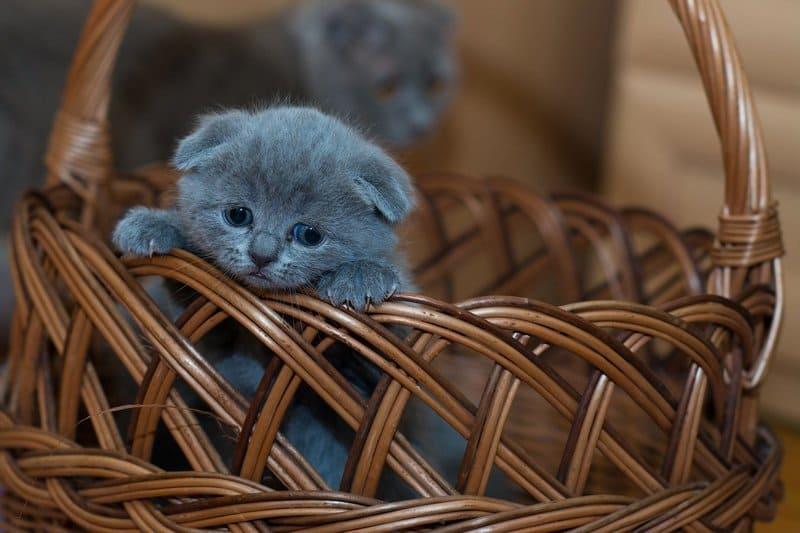 Фото серого котенка