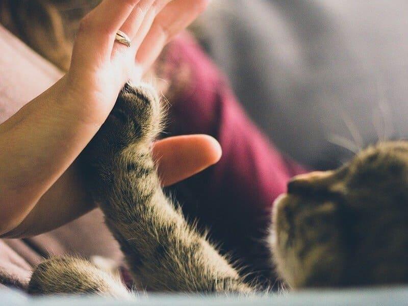 Фото сон с котенком