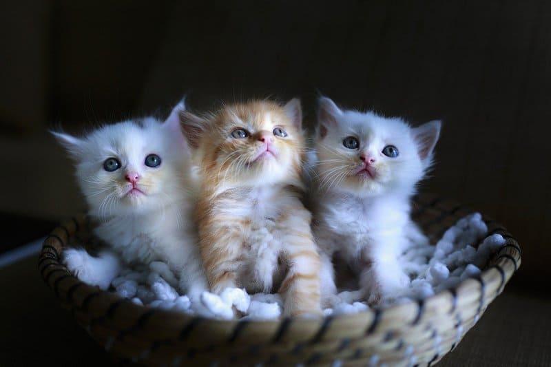 Фото 3 котят
